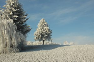 trees, snow, winter